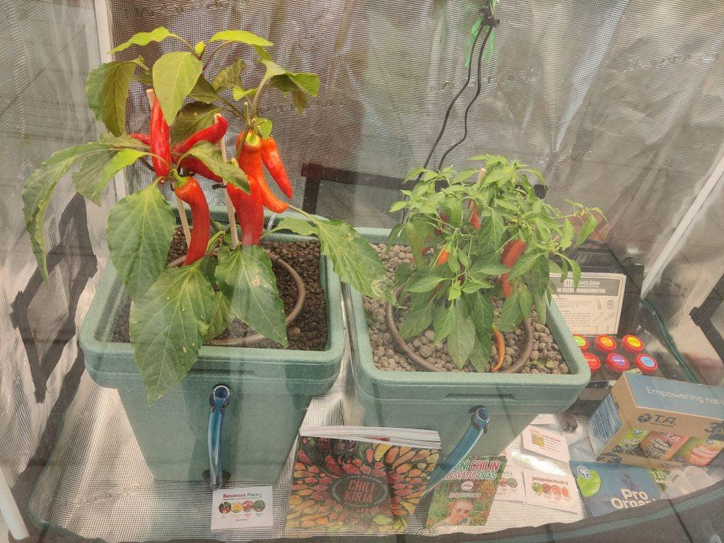 Plant B 28.4.2021 ikkuna